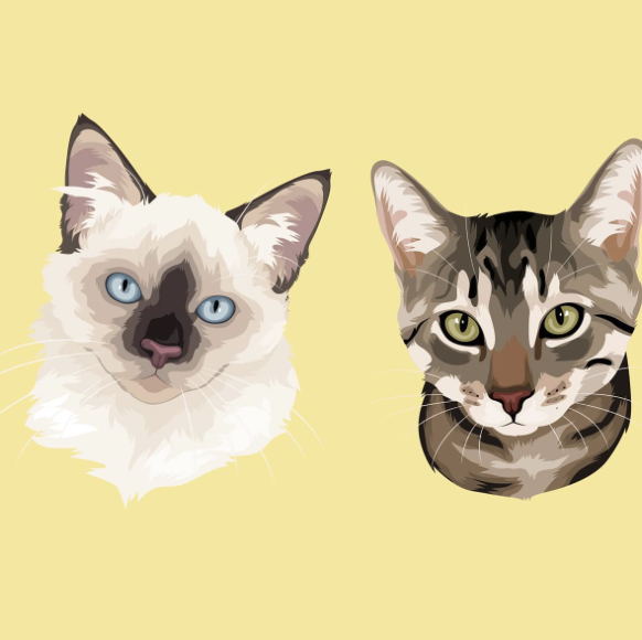 Cat illustration frame trends pet portrait