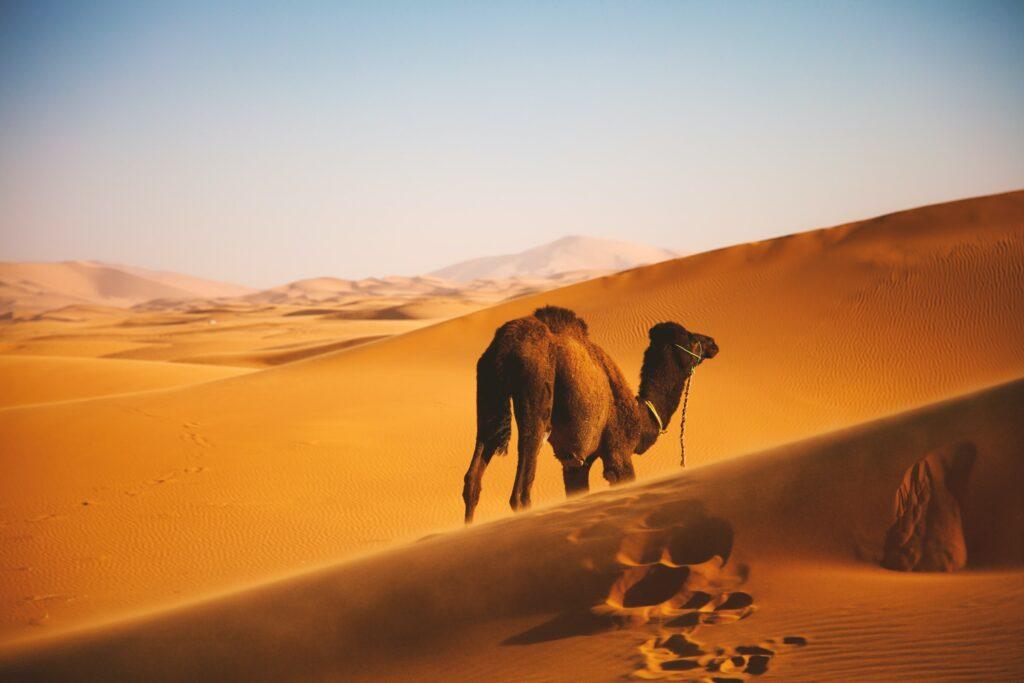 Morocco photo print and frame framing