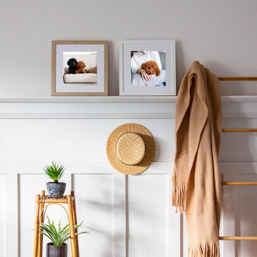 Pet Photography Portrait framing frames